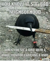 🤣: YOU KNOW IT'S A BAD  NEIGHBORHOOD  WHEN YOU SEE A BIRD WITH A  ANKLE MONITOR CARRYING A KNIFE  Meme King 🤣