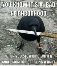 Bad, You, and When You: YOU KNOW IT'SA BAD  NEIGHBORHOOD  WHEN YOU SEE A BIRD WITH A  ANKLE MONITOR CARRYING A KNIFE