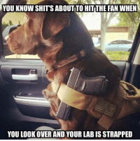 Memes, 🤖, and You: YOU KNOW SHITS ABOUT TO HITTHE FAN WHEN  YOU LOOK OVER AND YOUR LAB IS STRAPPED