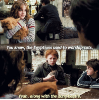 Have you seen Fantastic Beasts? - ravenclaw hufflepuff slytherin gryffindor harrypotter fantasticbeastsandwheretofindthem fantasticbeasts hermionegranger theleakycauldron ronweasley hogwarts ilvermorny jkrowling newtscamander: You know the Egyptians used to worship cats.  HermioneGranger44  Yeah, along with the dung beetl Have you seen Fantastic Beasts? - ravenclaw hufflepuff slytherin gryffindor harrypotter fantasticbeastsandwheretofindthem fantasticbeasts hermionegranger theleakycauldron ronweasley hogwarts ilvermorny jkrowling newtscamander