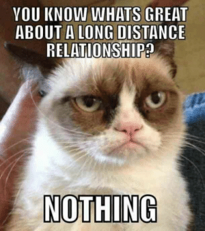 """You know what's great about a long distance relationship? Nothing."" #grumpycatmemes #ripgrumpycat #memes: YOU KNOW WHATS GREAT  ABOUT A LONG DISTANCE  RELATIONSHIP?  NOTHING ""You know what's great about a long distance relationship? Nothing."" #grumpycatmemes #ripgrumpycat #memes"