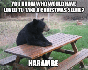 Oh what could have been: YOU KNOW WHO WOULD HAVE  LOVED TO TAKE A CHRISTMAS SELFIE?  HARAMBE  imgflip.com Oh what could have been