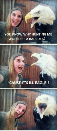 20 Funny Puns: YOU KNOW WHY HUNTING ME  WOULD BE A BAD IDEA?  CAUSE IT'S ILL-EAGLE!! 20 Funny Puns