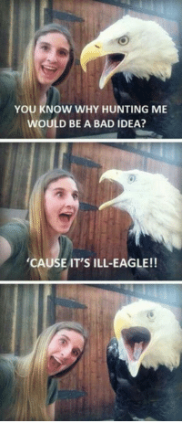 Bad, Memes, and Hunting: YOU KNOW WHY HUNTING ME  WOULD BE A BAD IDEA?  CAUSE IT'S ILL-EAGLE!! Memes