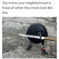 This crow hood af @toasty.memes: You know your neighborhood is  hood af when the crows look like  this  laasty memes This crow hood af @toasty.memes