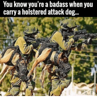 . www.tacticalgunners.com ✅ Double tap the pic ✅ Tag your friends ✅ Check link in my bio for badass stuff - american veteran veterans military soldier warrior america gun guns 2a secondamendment 2ndamendment k9 k9unit: You know you're a badass when you  carry a holstered attack dog... . www.tacticalgunners.com ✅ Double tap the pic ✅ Tag your friends ✅ Check link in my bio for badass stuff - american veteran veterans military soldier warrior america gun guns 2a secondamendment 2ndamendment k9 k9unit