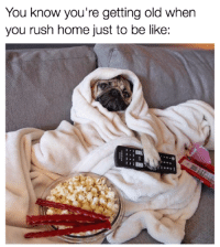 Be Like, Dank, and Life: You know you're getting old when  you rush home just to be like: I live the pug life.