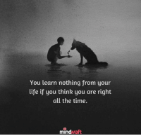 Life, Memes, and Time: You learn nothing from your  life if you think you are right  all the time.  mindvaft