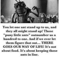 puny: You let one ant stand up to us, and  they all might stand up! Those  puny little ants  outnumber us a  hundred to one. And if we ever let  them figure that out  THERE  GOES OUR WAY OF LIFE! It's not  about food. It's about keeping those  ants in line.