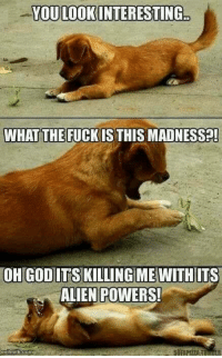 YOU LOOK INTERESTING  WHAT THE FUCK IS THIS MADINESS  OH GOD ITS KILLING ME WITH ITS  ALIEN POWERS!  evilmilk com ~Obaasan Doge