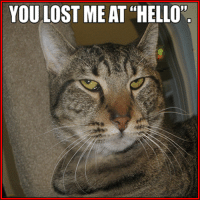 """Hello, Memes, and Lost: YOU LOST ME AT """"HELLO"""""""