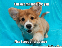 Memes, Couch, and 🤖: You love me and I love you  Also I peed on the couch  meme Center.com