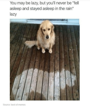 """Lazy, Memes, and Tumblr: You may be lazy, but you'll never be """"fell  asleep and stayed asleep in the rain""""  lazy  Source: best-of-memes memehumor:Laziness"""