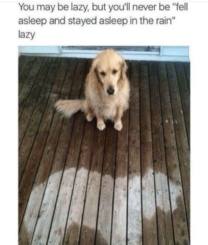"Lazy, Brain, and Rain: You may be lazy, but you'll never be ""fell  asleep and stayed asleep in the rain""  lazy See, you aren't lazy at all use our brain, idiots."