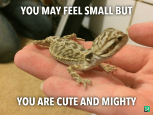 You Are Cute: YOU MAY FEEL SMALL BUT  YOU ARE CUTE AND MIGHTY