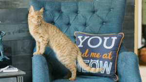 """Dad, Memes, and Party: YOU  me at  Iml YoYo is a great cat and the reason you should consider adopting an animal with special needs.  This video made me wonder why my Mom and Dad never threw a party for me.  When I asked Mom she replied, """"living with you Tigger makes every day a party.""""  My Mom has good taste.  ((((Hug"""