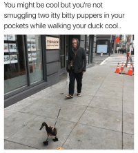 That's cool 😎 👉 @girlsthinkimfunny: You might be cool but you're not  smuggling two itty bitty puppers in your  pockets while walking your duck cool  PARAGON  nara That's cool 😎 👉 @girlsthinkimfunny