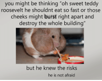 "teddy roosevelt: you might be thinking ""oh sweet teddy  roosevelt he shouldnt eat so fast or those  cheeks might burst right apart and  destroy the whole building""  but he knew the risks  he is not afraid"
