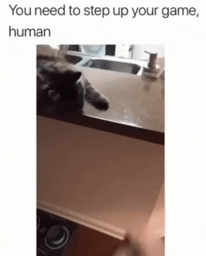 Funny, Game, and Cat: You need to step up your game,  human Cat have more skills then me via /r/funny https://ift.tt/2KhHBL4