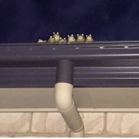 Family, Memes, and Watch: You never know when a frog family is watching you.