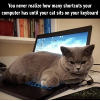 9gag, Memes, and Moms: You never realize how many shortcuts your  computer has until your cat sits on your keyboard Cat dads - moms can confirm.⠀ Follow @meowed cat computer 9gag