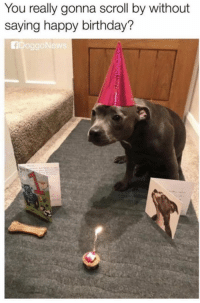 Birthday, Memes, and Happy Birthday: You really gonna scroll by without  saying happy birthday?  ADoggoNew https://t.co/Nb5kNw7uJN