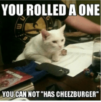 cheezburger: YOU ROLLEDAONE  YOU CAN NOT HAS CHEEZBURGER""