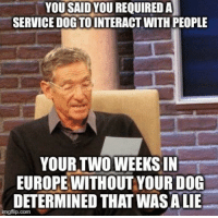 Facebook, Europe, and Dog: YOU SAIDYOU REQUIRED A  SERVICE DOG TOINTERACT WITH PEOPLE  YOUR TWOWEEKS IN  EUROPE WITHOUT YOUR DOG  DETERMINED THAT WAS ALIE  imgflip.com Facebook photos are evidence too
