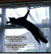 disney ride: You see curtains to cover the  windows from prying neighbors  and reduce glare.  our cat sees a combination of  a Disney ride and Bungee  Jumping  ICHNHASCHEEZEURGER,COM