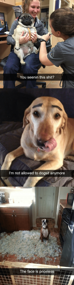Shit, Target, and Tumblr: You seenin this shit?   m not allowed to dogsit anymore   The face is priceless Dog snapsvia @animalsnaps