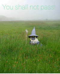 Memes, 🤖, and You Shall Not Pass: You shall not pass