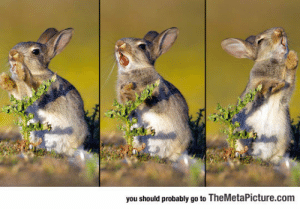 awesomesthesia:  Photographer Caught A Baby Bunny Trying To Eat A Thistle: you should probably go to TheMetaPicture.com awesomesthesia:  Photographer Caught A Baby Bunny Trying To Eat A Thistle