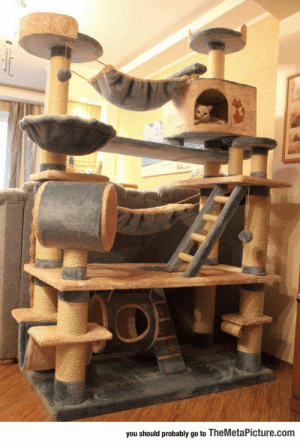 epicjohndoe:  Epic Cat Tree, Probably The Mansion Version: you should probably go to TheMetaPicture.com epicjohndoe:  Epic Cat Tree, Probably The Mansion Version