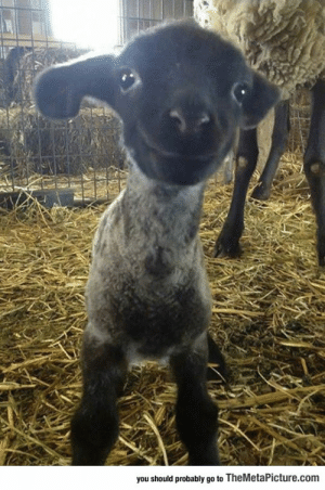 Bad, Bad Day, and Tumblr: you should probably go to TheMetaPicture.com lolzandtrollz:  Having A Bad Day? Well, Here's A Smiling Lamb