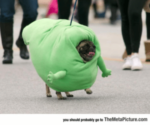srsfunny:Pug Marching As Slimer In The Spooky Pooch Parade: you should probably go to TheMetaPicture.com srsfunny:Pug Marching As Slimer In The Spooky Pooch Parade