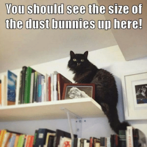 Bunnies, You, and Dust: You should see the size of  the dust bunnies up here!  erot