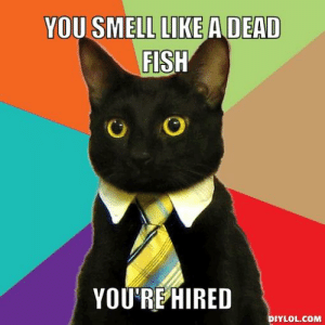 business-cat-meme-generator-you-smell-like-a-dead-fish-you-re-hired ...: YOU SMELL LIKE ADEAD  FISH  YOU'REHIRED  DIYLOL.COM business-cat-meme-generator-you-smell-like-a-dead-fish-you-re-hired ...