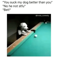 """Bruh this dog playing fuckin pool 😳: """"You suck my dog better than you""""  """"No he not stfu""""  """"Bet!""""  ainst a comedy Bruh this dog playing fuckin pool 😳"""