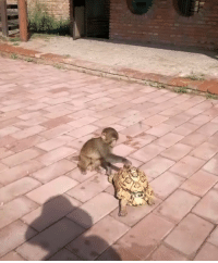 9gag, Memes, and Monkey: You supporting your mate - monkey 9gag