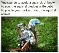 Life, Memes, and Squirrel: You swerve to avoid a squirrel. Unknown  to you, the squirrel pledges a life debt  to you. In your darkest hour, the squirre  arrives. https://t.co/crMdPoFlH1