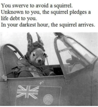 "Life, Http, and Karma: You swerve to avoid a squirrel.  Unknown to you, the squirrel pledges a  life debt to you.  In your darkest hour, the squirrel arrives. <p>Squirrel Karma via /r/wholesomememes <a href=""http://ift.tt/2F8etn7"">http://ift.tt/2F8etn7</a></p>"