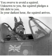 Life, Memes, and Squirrel: You swerve to avoid a squirrel.  Unknown to you, the squirrel pledges a  life debt to you.  In your darkest hour, the squirrel arrives. He shall return via /r/memes https://ift.tt/2rkiMpP