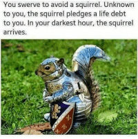 😂😂😂 funnymemes memes squirrels knight: You swerve to avoid a squirrel. Unknown  to you, the squirrel pledges a life debt  to you. In your darkest hour, the squirrel  arrives. 😂😂😂 funnymemes memes squirrels knight
