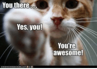You there  Yes, you!  You're  awesome! Remember How truly Awesome you are on this Monday!