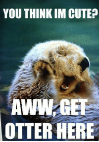 Otter Meme: YOU THINK IM CUTE?  AWANGEF  OTTER HERE