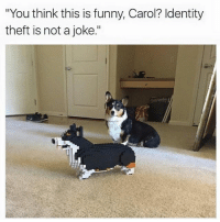 """Funny, Memes, and 🤖: """"You think this is funny, Carol? Identity  theft is not a joke."""" It's not funny Carol @thegingerjew_ rihpost doggo"""