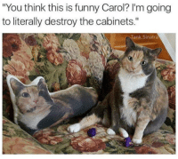 "Funny, Memes, and 🤖: ""You think this is funny Carol? l'm going  to literally destroy the cabinets.""  an  Sinatra"