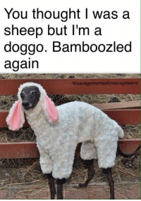 ~Ossi: You thought I was a  sheep but I'm a  doggo. Bamboozled  again  @savagememesforsavage teens ~Ossi