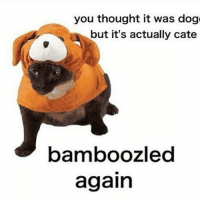B A M B O O Z L E D: you thought it was dog  but it's actually cate  bamboozled  again B A M B O O Z L E D