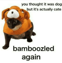 Bamboozled • • • memes dankmemes harambe fnaf rickharrison dank spongebob mermaidmanandbarnacleboy instagood instadaily pepe thuglife savage seasamestreet cringe keemstar idubbbz minecraft trump youtube funny csgo starbucks usa blacklivesmatter fallout4 lol adamsandler bruh leafy: you thought it was dog  but it's actually cate  bamboozled  again Bamboozled • • • memes dankmemes harambe fnaf rickharrison dank spongebob mermaidmanandbarnacleboy instagood instadaily pepe thuglife savage seasamestreet cringe keemstar idubbbz minecraft trump youtube funny csgo starbucks usa blacklivesmatter fallout4 lol adamsandler bruh leafy